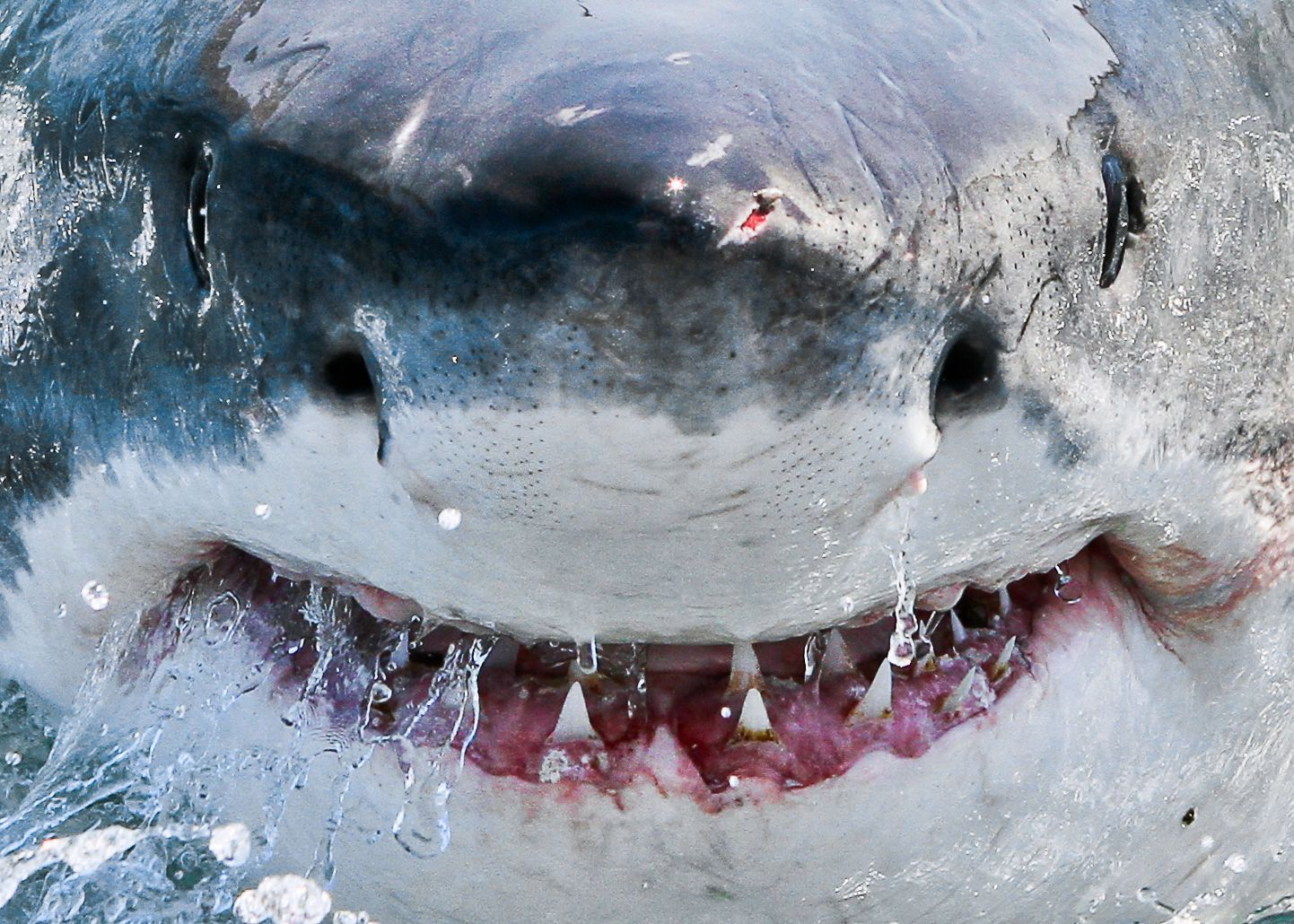 The toothy grin of the ocean's top predator