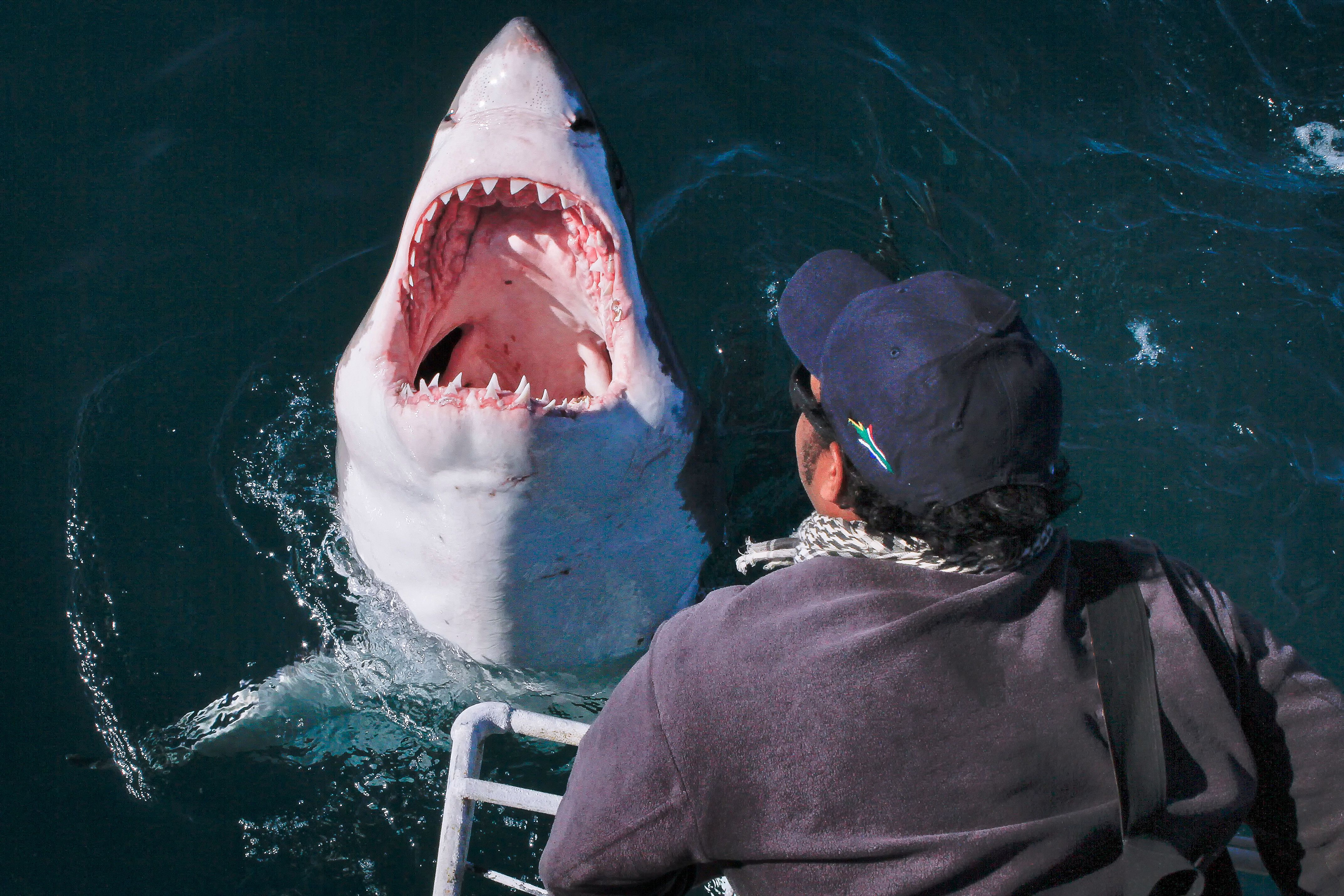 A photographer looks on as he stands terrifyingly close to the monster fish