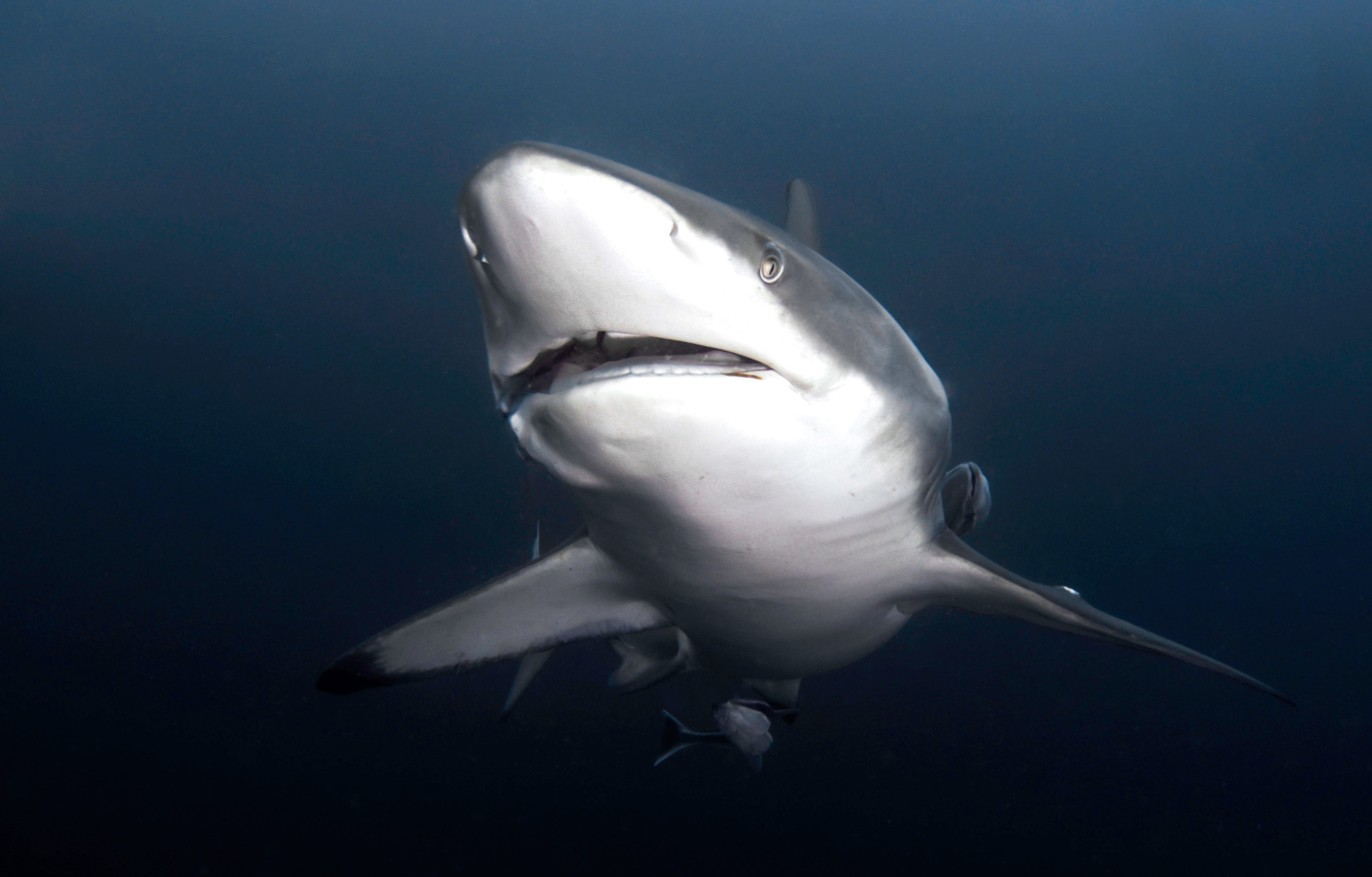 Blacktip sharks could be seen circling Andrea on her dive off South Africa