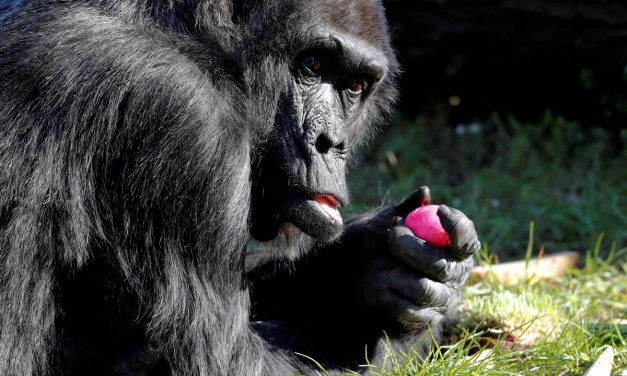 German zoos ask Merkel for funds to feed animals during crisis