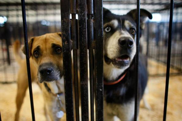 Coronavirus: Animal shelters clear out twice in one week as pets get adopted in droves
