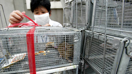 HANTAVIRUS the next big killer… really? Twitter spreads groundless MASS PANIC as man in China dies from little-known disease — RT World News